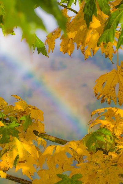 autumn-rainbow