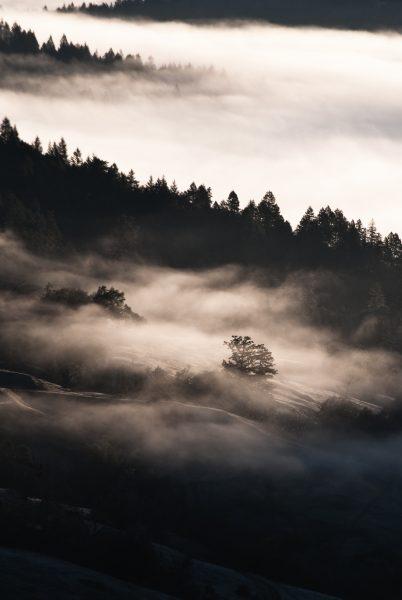 fog-frost-sun