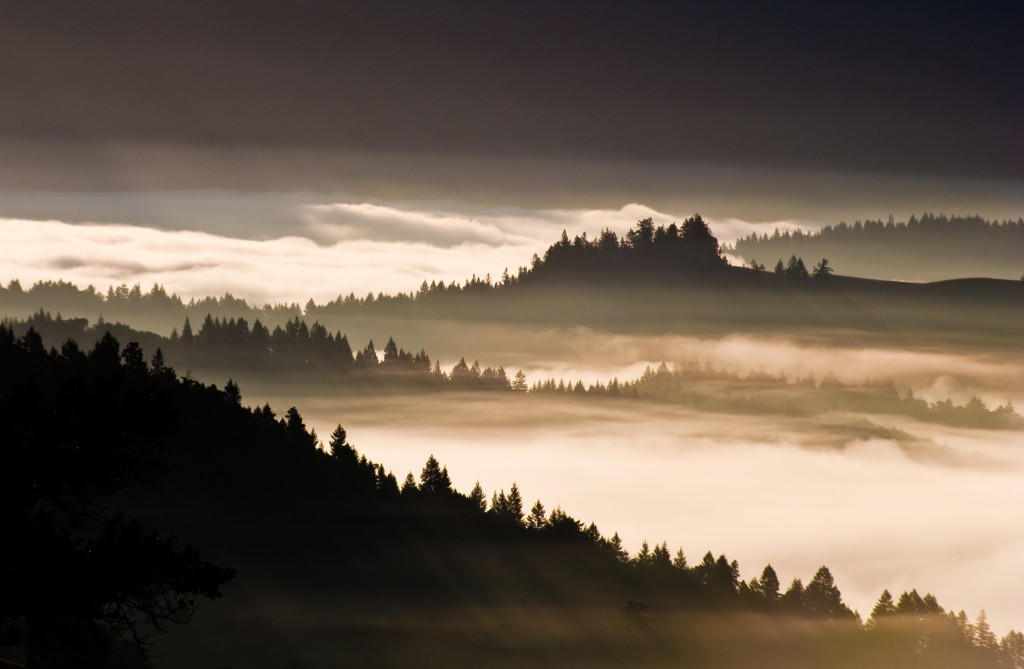 In the Fog About Our Weather This Summer? Here's a Misty-cal