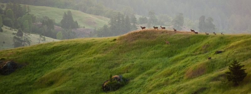 deer on hill side