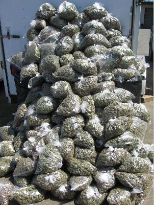 Marijuana mountain