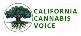 California cannabis voice
