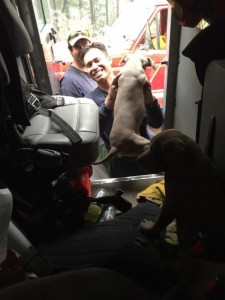 Firefighters Rescue momma dog and pups  in the Fork Complex. [Photo from InciWeb]