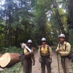 The Mad River Complex: a faller crew after cutting a large tree on the Gobbler Fire. [Photo from InciWeb]