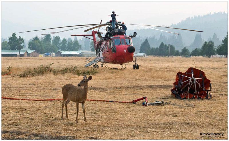 doe_helicopter_sallaway_1717
