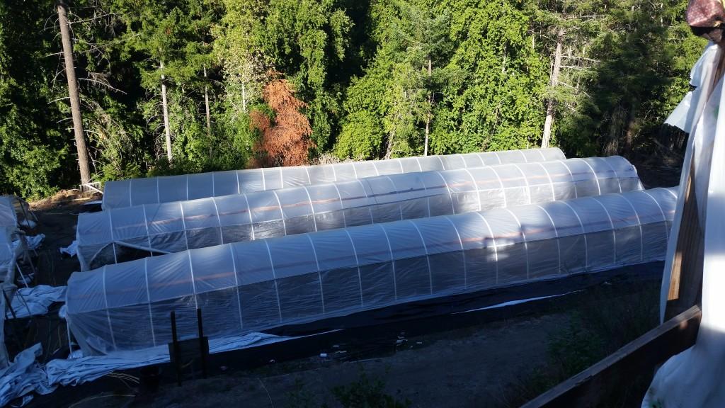 201504600 greenhouses