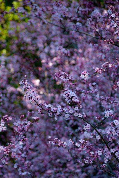 trees flowers1-2
