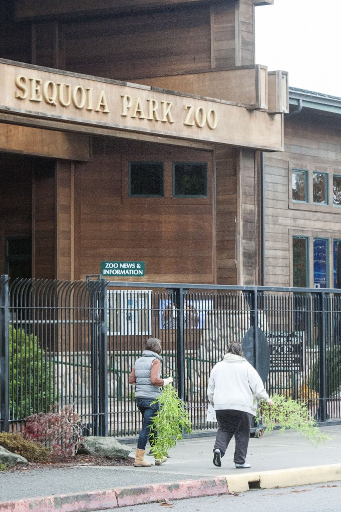 Volunteers searching for Masala, the missing red panda, leave the Sequoia Park Zoo in Eureka with bamboo as they head to their assigned search area Saturday Morning.