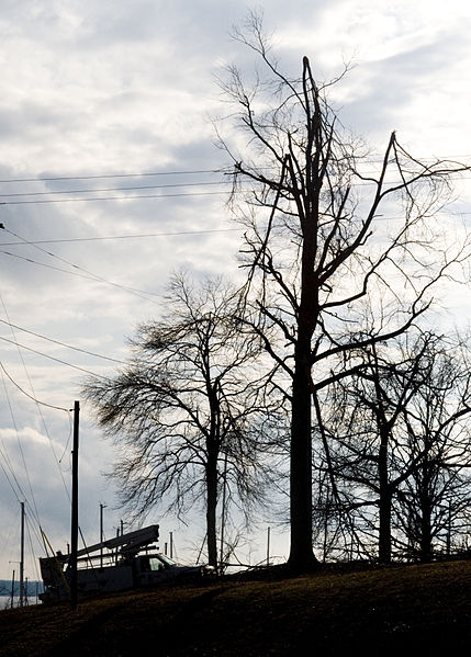 429px-FEMA_-_40035_-_Utility_workers_and_broken_trees_in_Kentucky