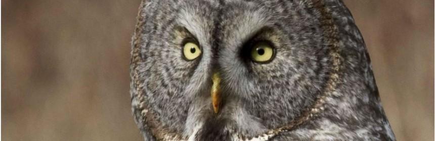 Owl by Jill Duffy