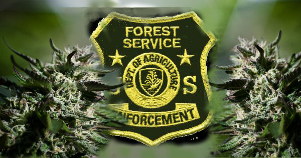 Forest Service Marijuana