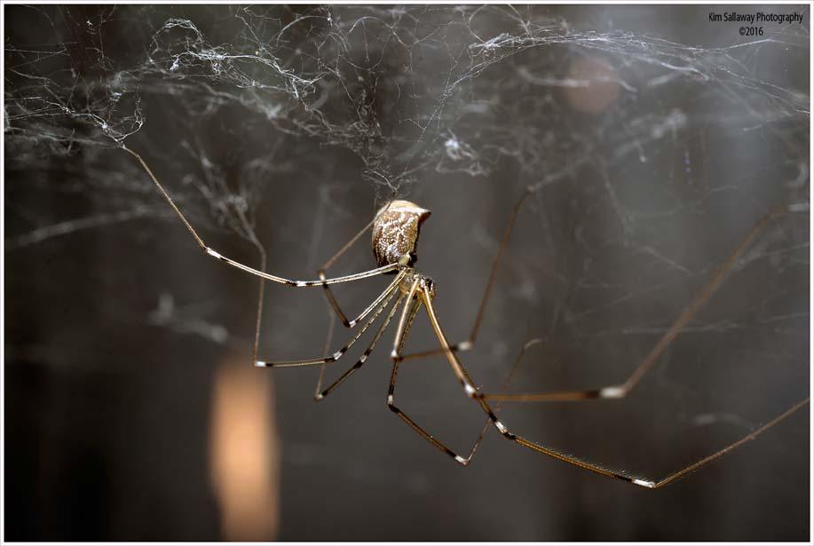 spider_in_web_sallaway_7844 (1)