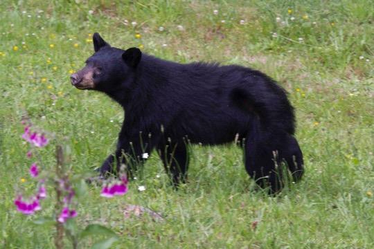 Bear in June 6851: Jill Duffy