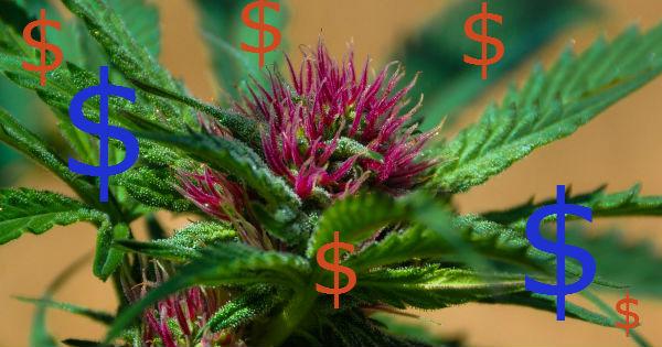 Money and marijuana feature