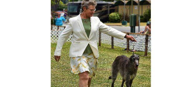 Dog Show Humboldt