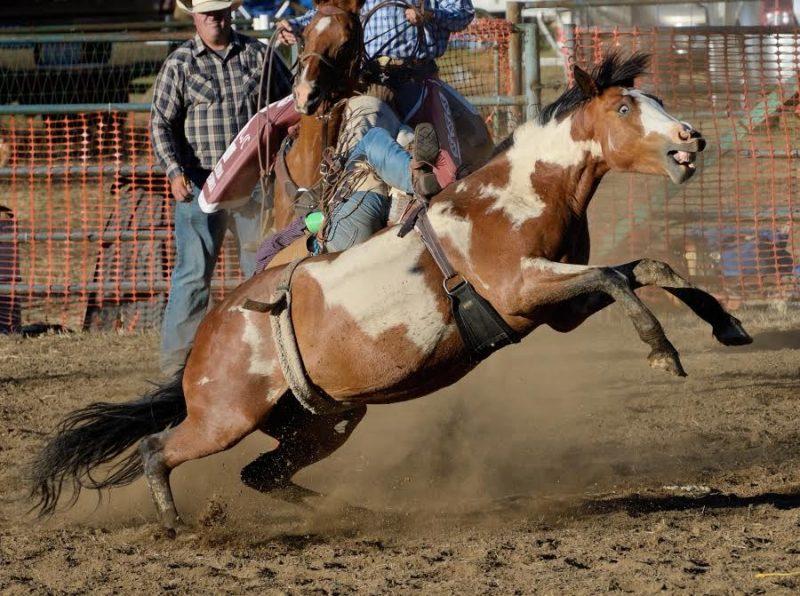 Lynn Harrington: Garberville Rodeo