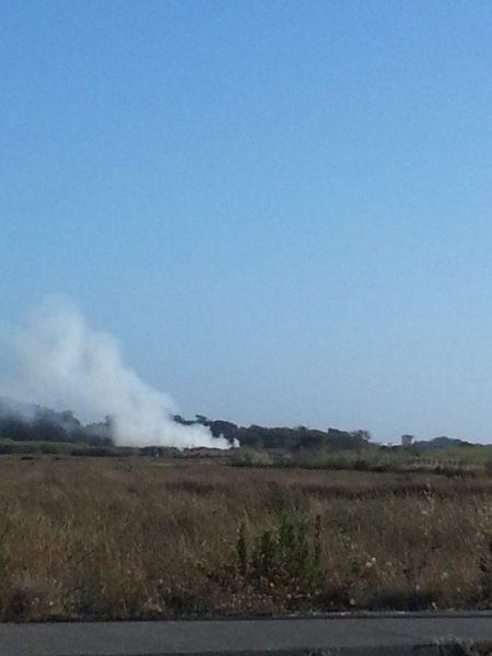 Fire Palco Marsh 7/31/16