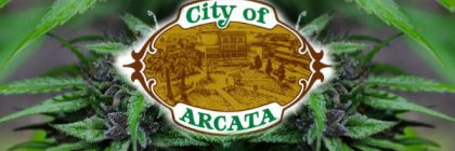 Arcata City marijuana feature