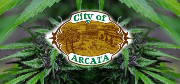 Arcata City marijuana feature
