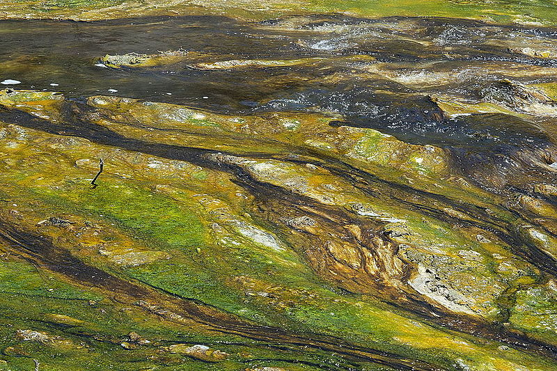 Blue green algae and mineral deposits in Waimangu Stream Hot Water Creek.