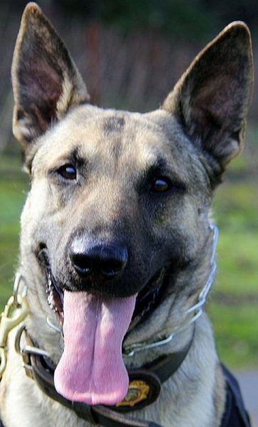 K9 Johnny trinity county