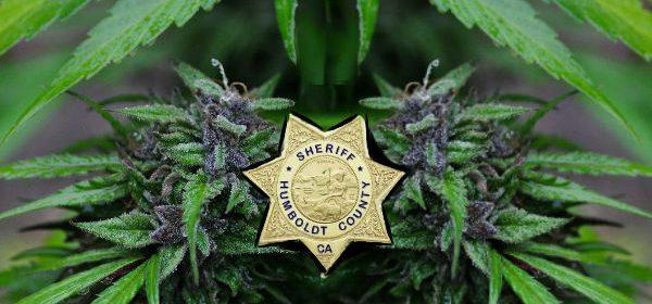 Humboldt County Sheriff Marijuana