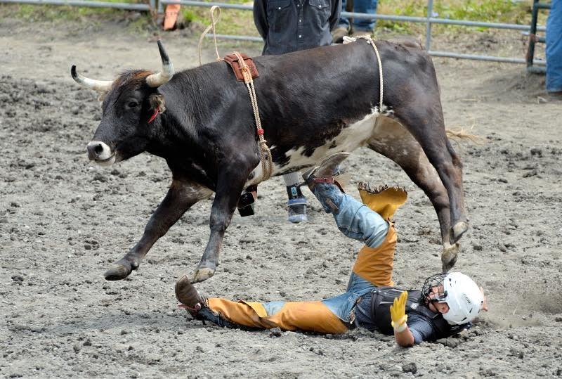 Rodeo: calf rider
