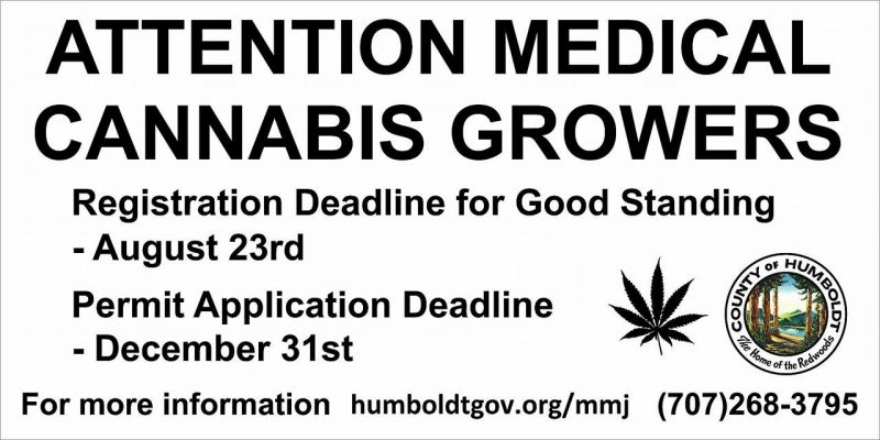 Humboldt County Attention cannabis