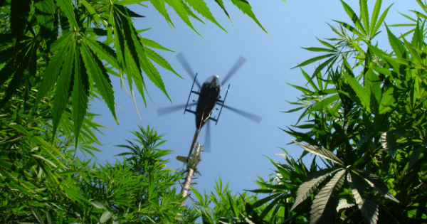 Marijuana helicopter feature