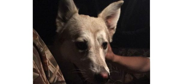 Lost dog feature