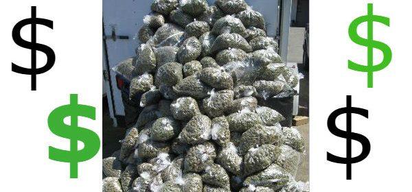 mountain of marijuana money