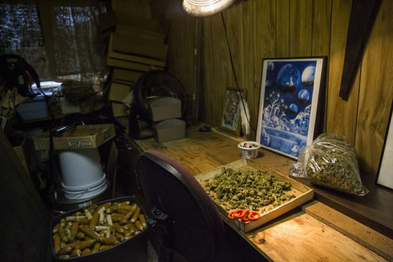 In this posed photograph, marijuana buds are displayed on a table where marijuana is usually trimmed by immigrant workers, in Petrolia, CA, on May 24, 2016. Andrew Burton for The Center for Investigative Reporting