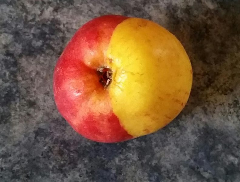 Multi colored apple