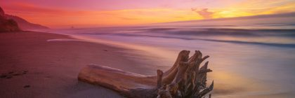 Sunset with driftwood