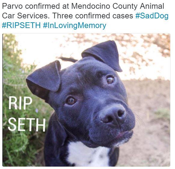 RIP Seth Parvo