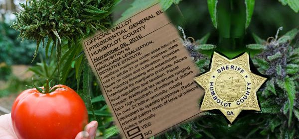 Image for Prop 64 Marijuana legalization or not