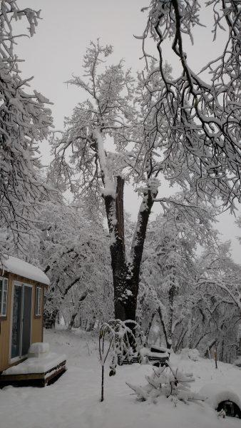"6 "" of snow"