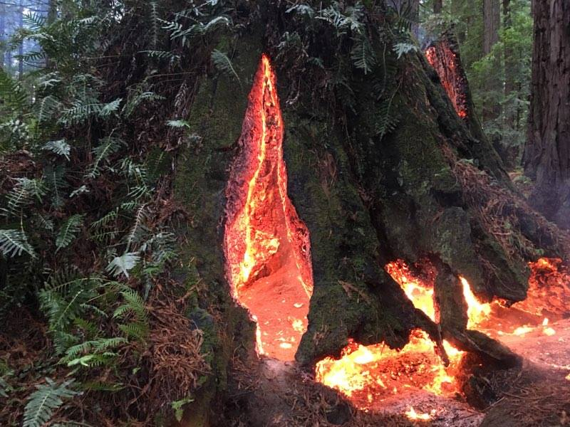 stump-fire