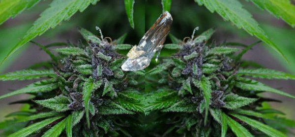 Glass slipper on marijuana