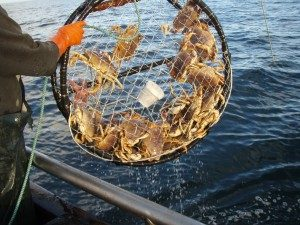 Crab pot from