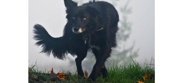 Dog in fog [Photo by Kym Kemp]