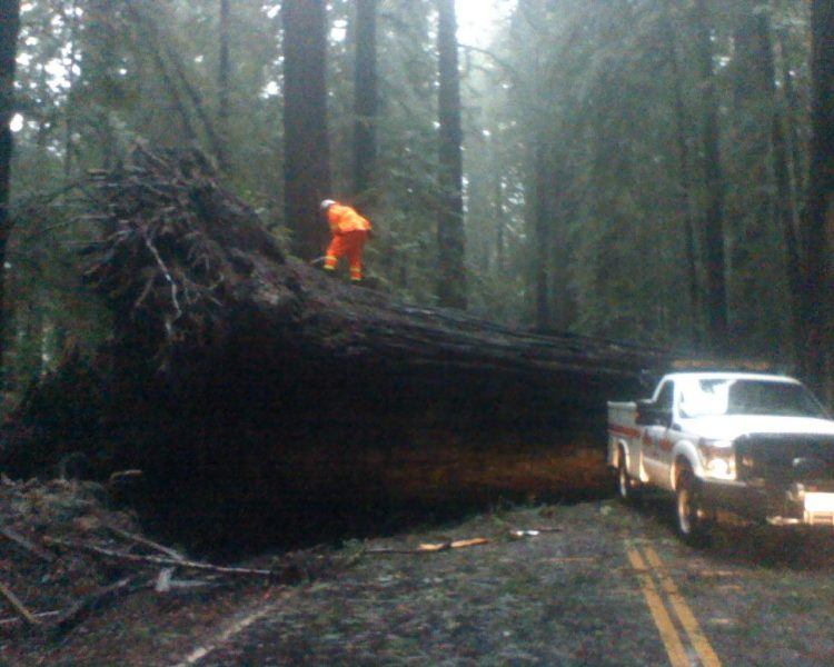 Redwood down on the Avenue of the Giants