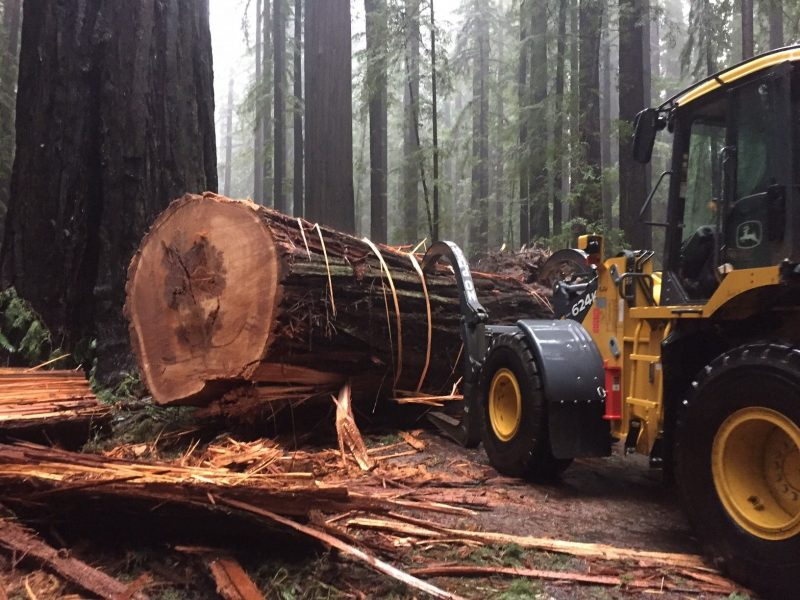 Heavy equipment removes fallen tree from road