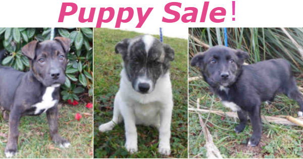 Puppy Sale poster