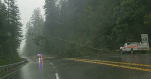 Tree over freeway blocking lanes