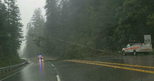Tree over freeway blocking lanes