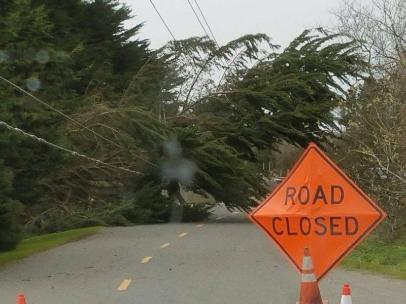 Tree in the road near Ferndale. [Photo by Curtis Rogers]