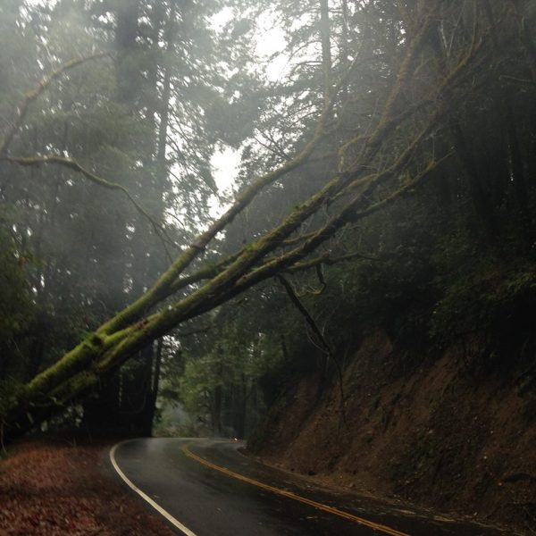 Tree falling on Road