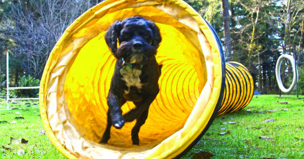 black Dog in yellow tube