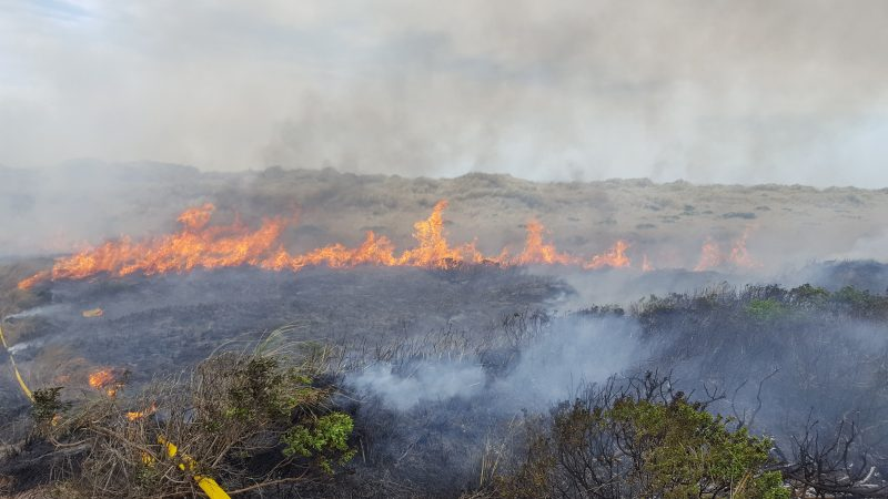 large wildland fire